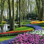 Keukenhof Gardens - credit VisitKeukenhof