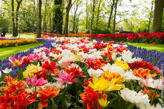 blog - keukenhof gardens 3