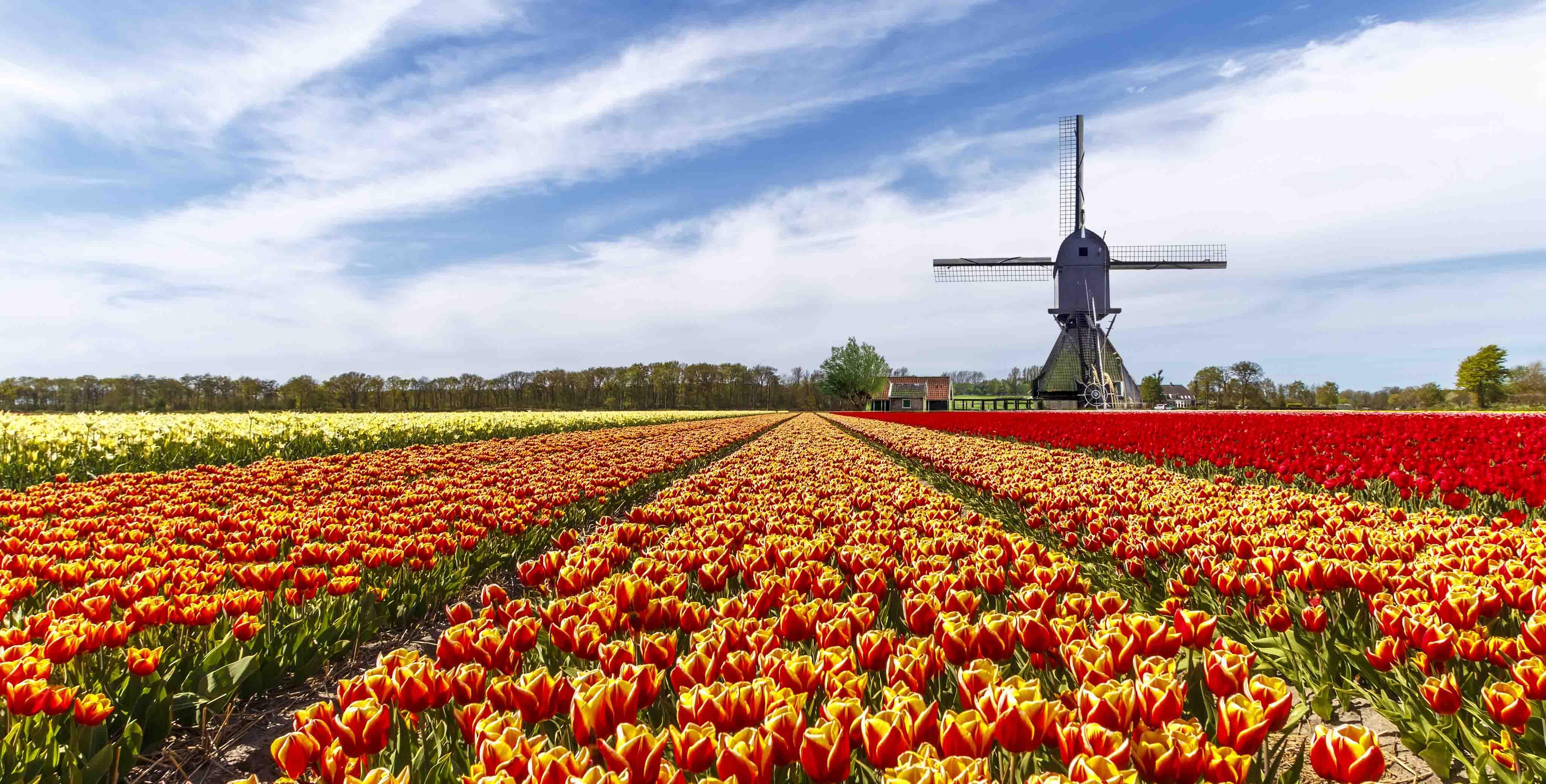 Images Of Beautiful Gardens Amsterdam And The Keukenhof Bulb Fields Osprey Holidays